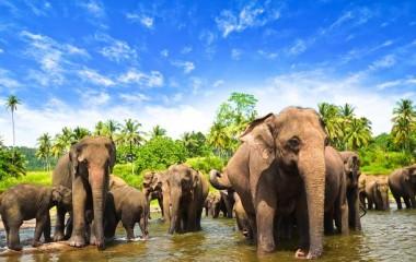 Clubs & School Cricket Tours to Sri Lanka